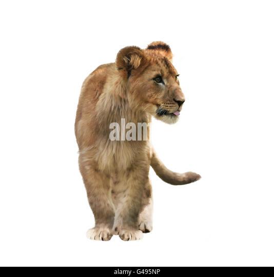 Digitale Malerei von Lion Cub isoliert auf weißem Hintergrund Stockbild