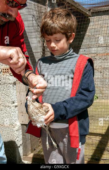 Kleiner Junge Holding blind eurasischen Triel (Burhinus Oedicnemus) während Gründer und Direktor des Ägäischen Stockbild