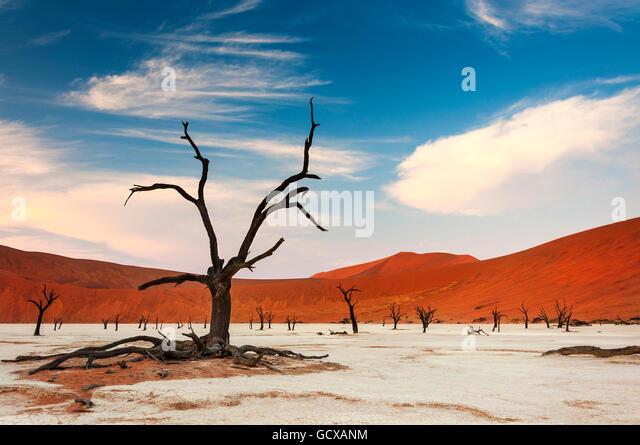 Blick auf das Deadvlei in Namibia, Afrika Stockbild