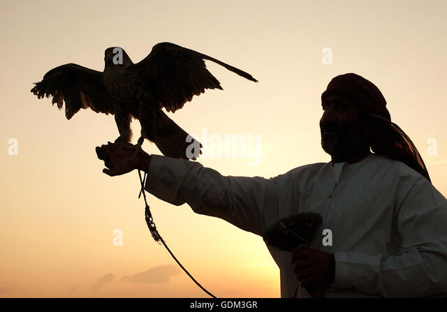 Falconnery in Dubai, Dubai, Vereinigte Arabische Emirate. Stockbild