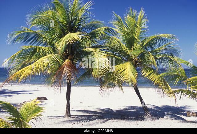 der Strand von Tela in der Nähe von San Pedro Sula am Meer sowie in Honduras in Mittelamerika Stockbild