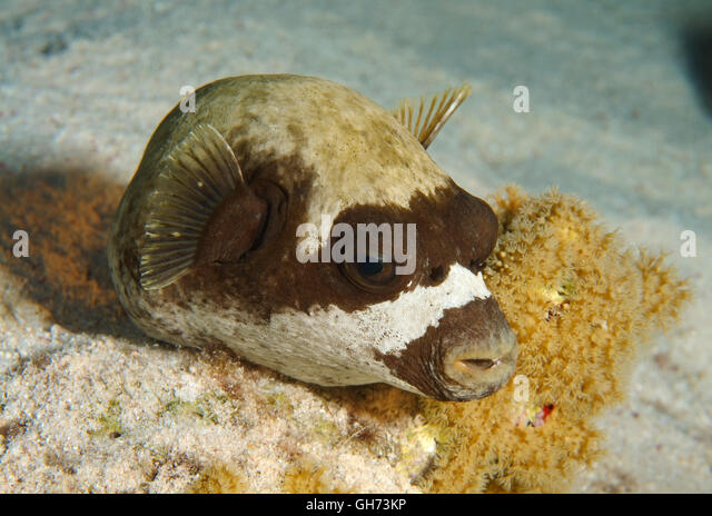 sleeping with fishes stockfotos sleeping with fishes bilder alamy. Black Bedroom Furniture Sets. Home Design Ideas