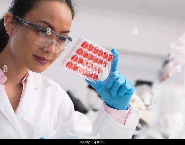 Wissenschaftlerin Zellkulturen in Multi gut Fach im Labor untersuchen Stockbild