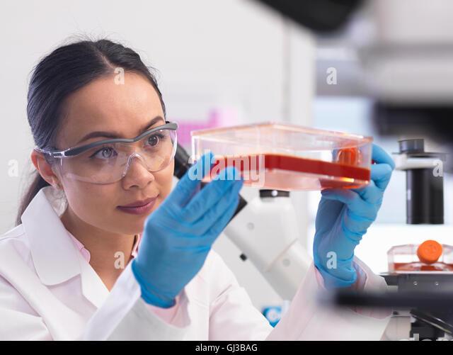 Wissenschaftlerin Zellkulturen wachsen in einem Kultur-Glas im Labor untersuchen Stockbild