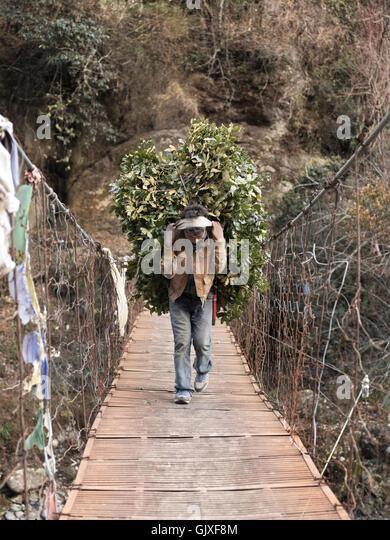 Ein nepalesischer Mann trägt Zweige auf dem Rücken, über eine Hängebrücke in der Nähe Stockbild