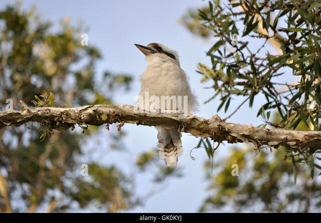 Tiere Vogel native Stockbild