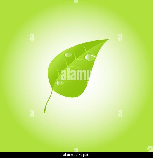 Grünes Blatt mit Tautropfen. Vektor. EPS 10 Stockbild