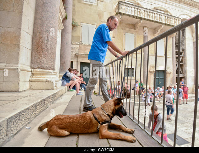 Blenheim Dog Kennel V