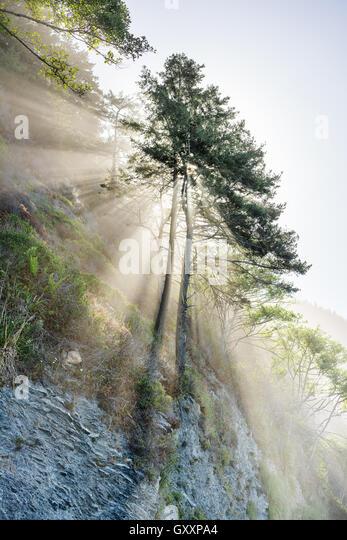 Die Sonne scheint durch die Bäume auf The Lost Coast of California. Stockbild
