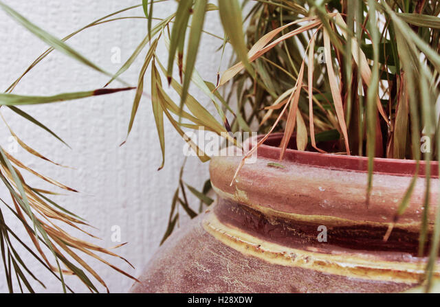 Zimmerpflanze Stockbild