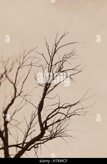 Kahler Baum Silhouette. Launisch und poetische Art Szene. Dunkle Äste und Himmel. Stockbild