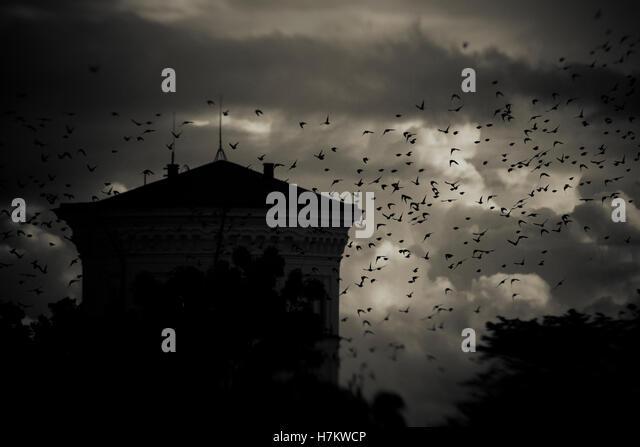 Vogelschwarm vorbeifliegen Gebäude in der Nacht mit Sturm Wolken im Hintergrund. Dunkel, launisch und gruselige Stockbild