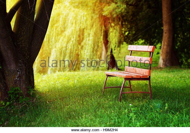 lonely bench under tree in stockfotos lonely bench under tree in bilder alamy. Black Bedroom Furniture Sets. Home Design Ideas