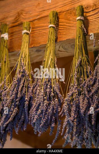 Lavendel hing trocken bei Pelindaba Lavender Farm, San Juan Island, Washington, USA Stockbild