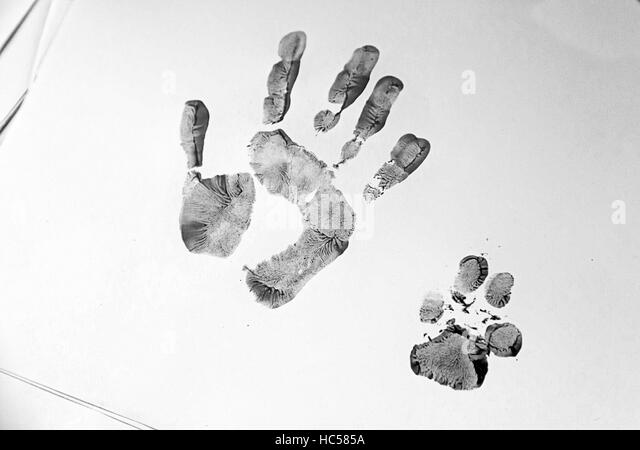 paw print paint stockfotos paw print paint bilder alamy. Black Bedroom Furniture Sets. Home Design Ideas