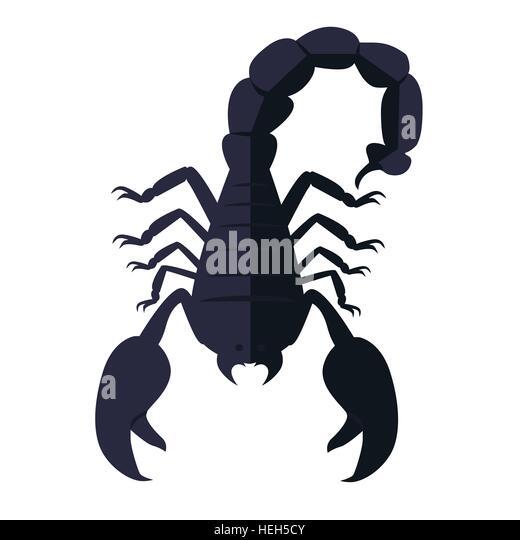Scorpion-Tier, Isolated on White Background. Scorpion Tier isoliert auf weißem Hintergrund. Tödlich giftigen - Stock-Bilder