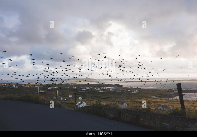 Ein Mord von Krähen fliegen über Bun Na Leaca, County Donegal.  Irland Stockbild