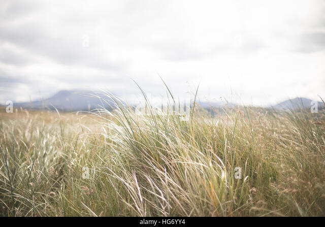 Meer Rasen Hintergrund Detail.  Donegal, Irland Stockbild
