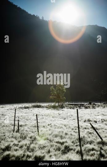 Linseneffekt der Silhouette eines Baumes alleine in einem Feld mit entsättigten Farben. Stockbild