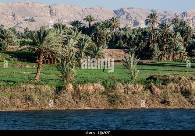 Arbeiter im Feld schleppen Pflanzen entlang dem Nil-Delta in Ägypten. Stockbild