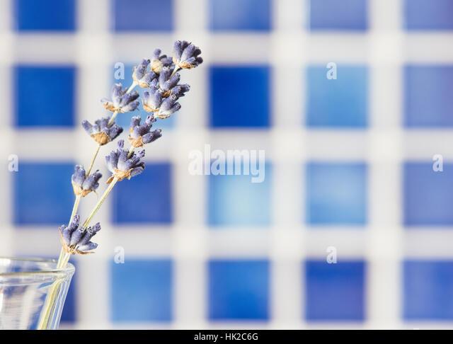 Lavendel Blumen in Glasvase mit blauem Hintergrund. Blumenstilleben. Stockbild