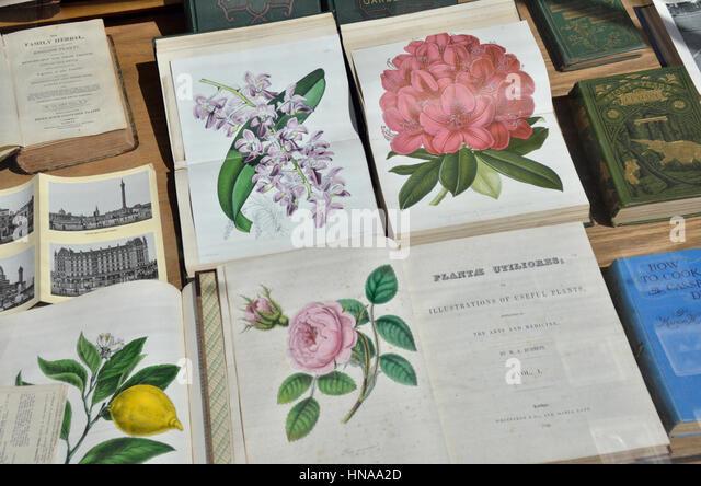 Antiquarische Bücher über Pflanzen Stockbild