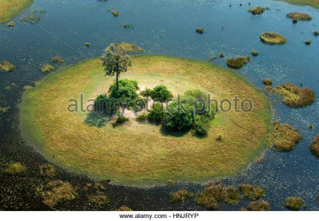 Eine kleine Insel in einem Feuchtgebiet in Botswana. Stockbild