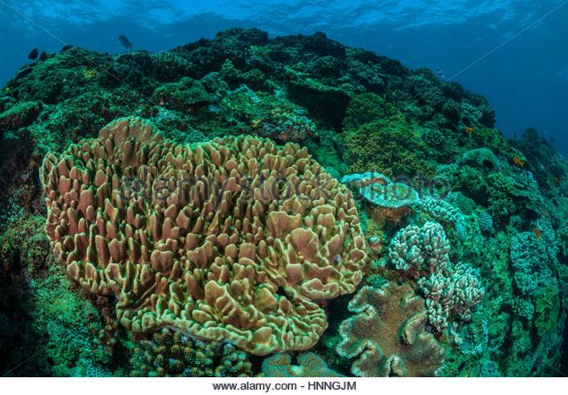 Das Techobanine Korallenriff in der Ponta Oro Marine Reserve, Mosambik. Stockbild