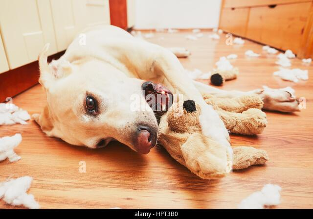 Naughty Dog Stockfotos & Naughty Dog Bilder Alamy