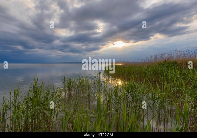 Schilf am Neusiedlersee mit Sonne in Weiden, Burgenland, Österreich Stockbild