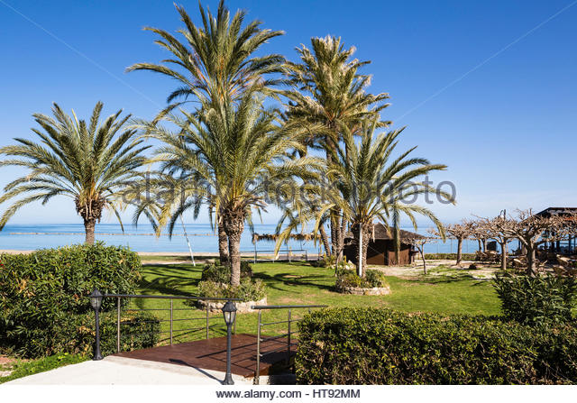 Palmen an der Promenade vom Strand und Mittelmeer, Latsi, Zypern Stockbild