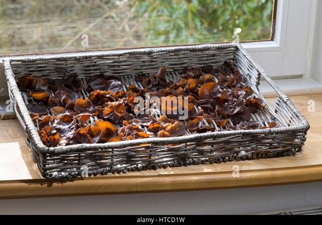 Judasohr, Judasohren Auf Einem Tablett Auf der Fensterbank Trocknen, Pilze Trocknen, Trocknung, Pilzernte, Pilze Stockbild