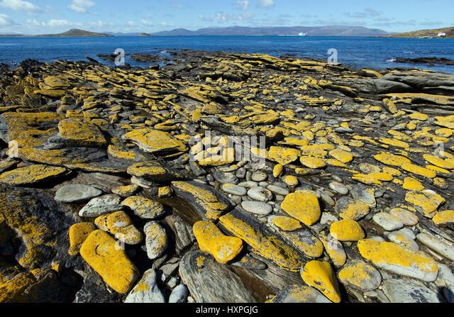 Küstenlandschaft - Falkland-Inseln, Kuestenlandschaft - Falkland Inseln Stockbild