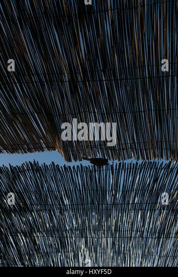 Ein Vogel gesehen durch Reed Latten in Khiva, nördlichen Usbekistan Stockbild