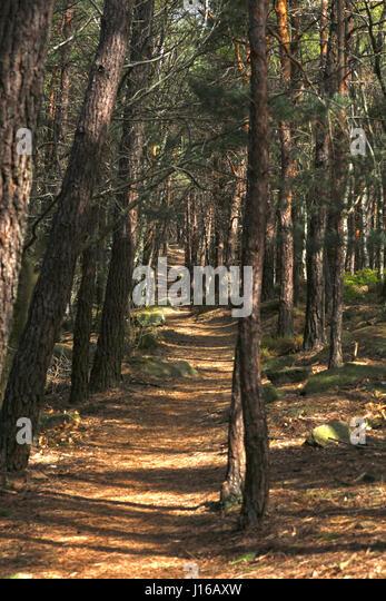 Wanderweg Im Pfälzer Wald Stockbild
