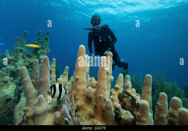 Riff-Szene mit Taucher und Säule Korallen. Stockbild