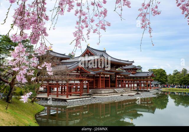 cherry blossom kyoto stockfotos cherry blossom kyoto. Black Bedroom Furniture Sets. Home Design Ideas