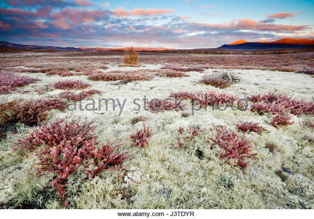 Herbstmorgen im Fokstumyra Naturreservat, Dovre, Norwegen. Stockbild