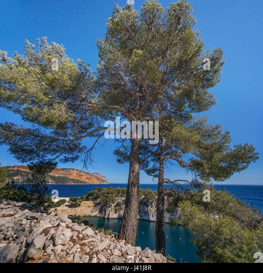 Port-Miou, Calanques, Cliff, Cassis, Provence, Frankreich Stockbild