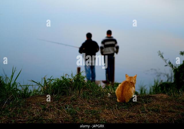 Tschuwaschien, Russland, 22. August 2011: Eine rote Katze am Strand der Fischer um Fische zu fangen wartet. Stockbild