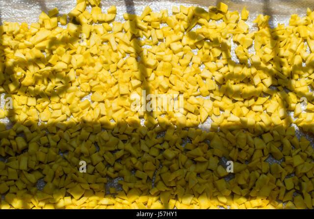 Mango Stücke trocknen in der Sonne für die Herstellung von Gurken in Indien Stockbild