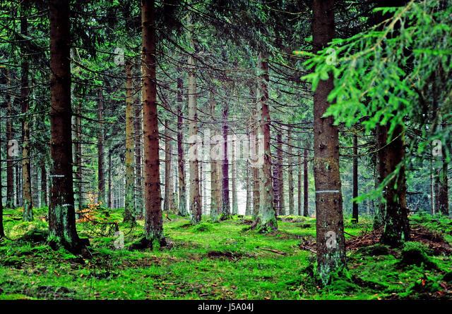 Thüringer Wald, Deutschland Stockbild