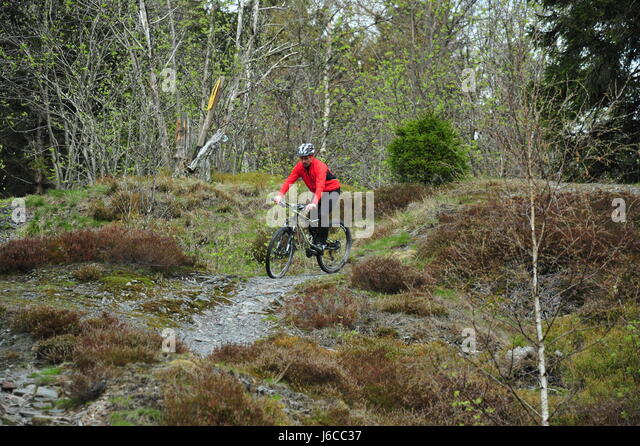 Mountainbiking, Thüringer Wald, Deutschland Stockbild
