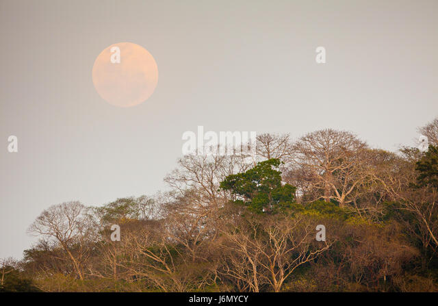 Mond über dem Regenwald neben Rio Chagres in Soberania Nationalpark, Republik von Panama. Stockbild