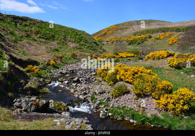Carey Burn, Harthope Tal, Northumberland Stockbild