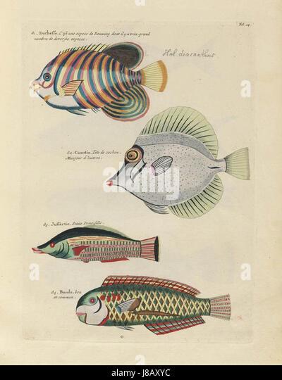 Bilder von der ersten Farbe Veröffentlichung auf Fisch (1754) Stockbild