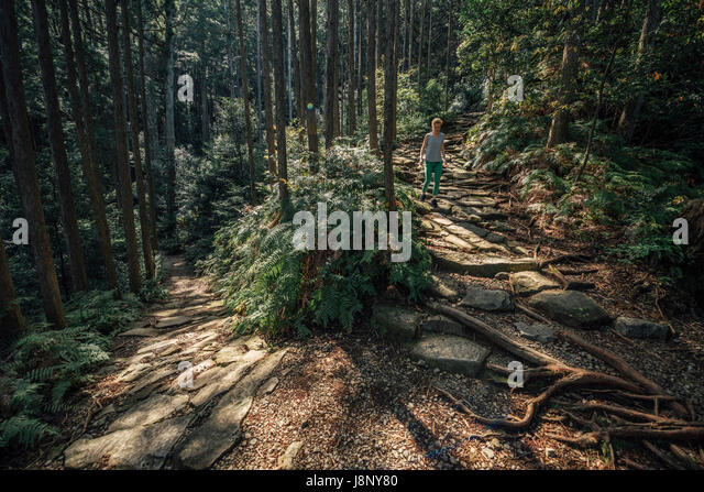 Wanderer zu Fuß in Wald Stockbild