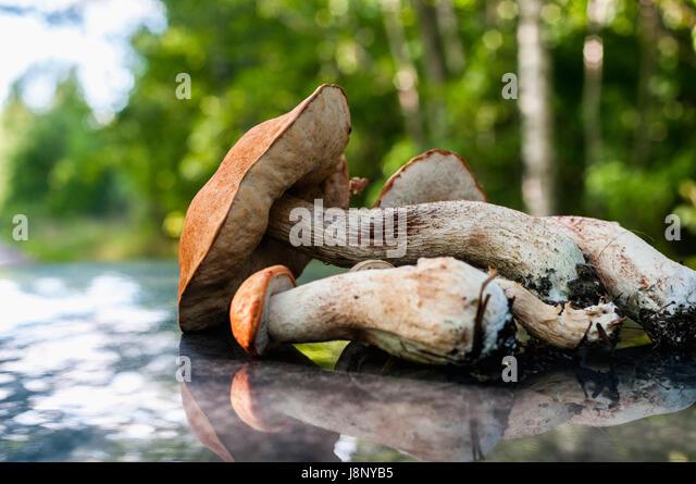 Nahaufnahme von Pilzen Stockbild