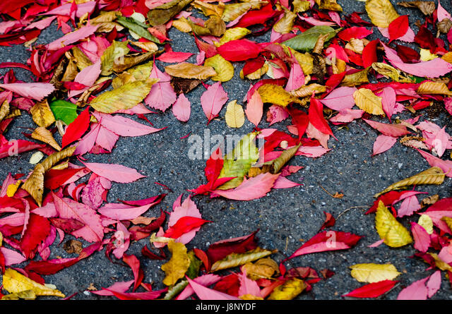 Laub auf Boden Stockbild