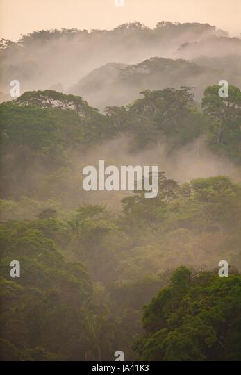 Soberania Nationalpark, Republik Panama, 20. Mai 2014. Nebligen Regenwald nach Regenfällen im Soberania Nationalpark, Stockbild